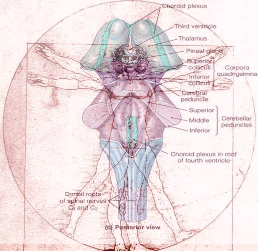 Body_Brains